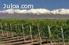 Bodega de vinos en montañas con 50 Has de viñedos Argentina