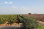 finca agricola de 66ha. en Sevilla frutales
