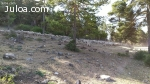 Se vende 600 ovejas merinas PAC - sierra Teruel