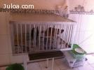 Vendo Gaiola toda em aluminio para frangos e outras aves RJ